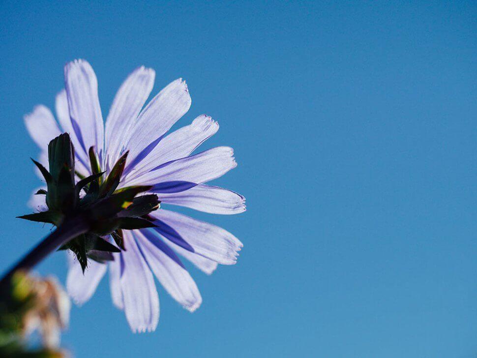 gratis-stockfoto-bloemen
