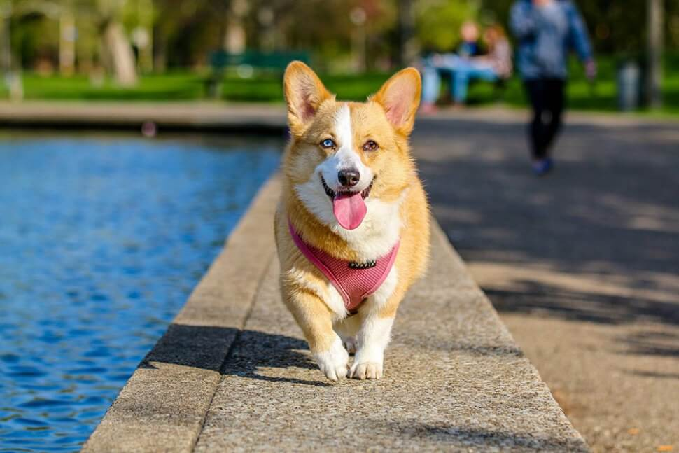 gratis-stockfoto-honden